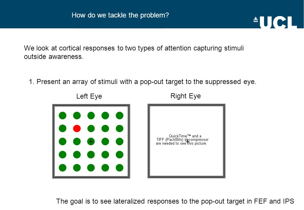 How do we tackle the problem? Left Eye Right Eye We look at cortical responses to two types of attention capturing stimuli outside awareness. 1. Prese