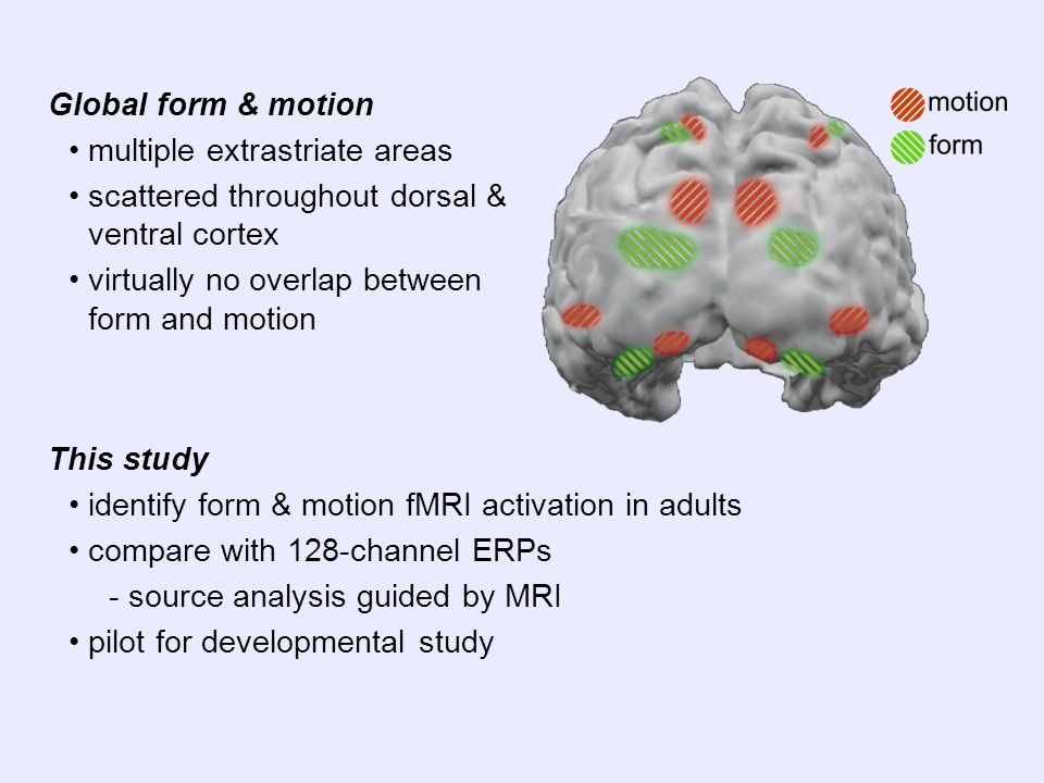 This study identify form & motion fMRI activation in adults compare with 128-channel ERPs - source analysis guided by MRI pilot for developmental study Global form & motion multiple extrastriate areas scattered throughout dorsal & ventral cortex virtually no overlap between form and motion