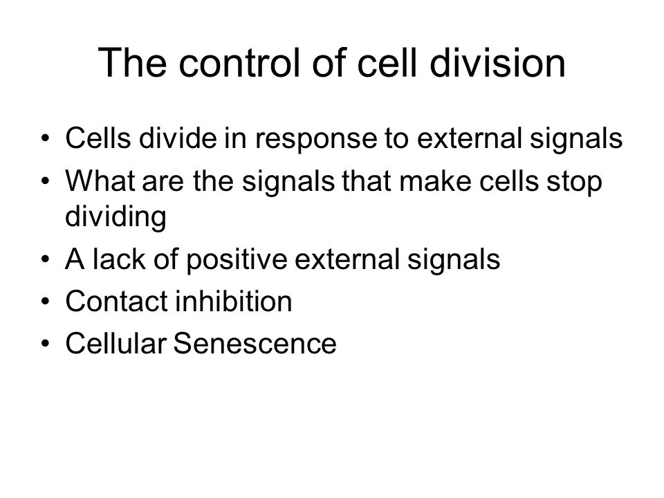 The control of cell division Cells divide in response to external signals What are the signals that make cells stop dividing A lack of positive extern