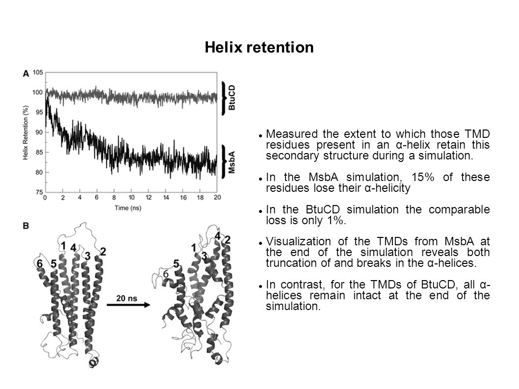Helix retention Measured the extent to which those TMD residues present in an α-helix retain this secondary structure during a simulation. In the MsbA