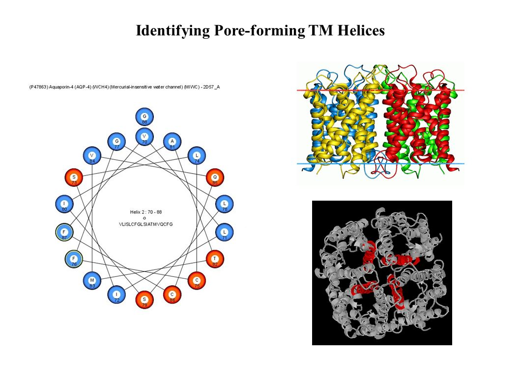 Identifying Pore-forming TM Helices