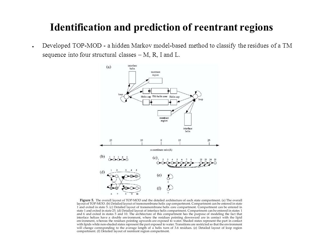 Identification and prediction of reentrant regions Developed TOP-MOD - a hidden Markov model-based method to classify the residues of a TM sequence into four structural classes – M, R, I and L.