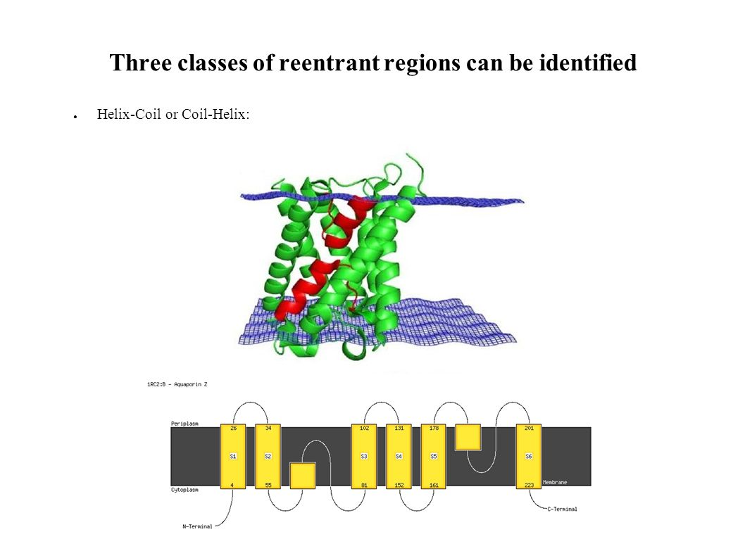 Three classes of reentrant regions can be identified Helix-Coil or Coil-Helix: