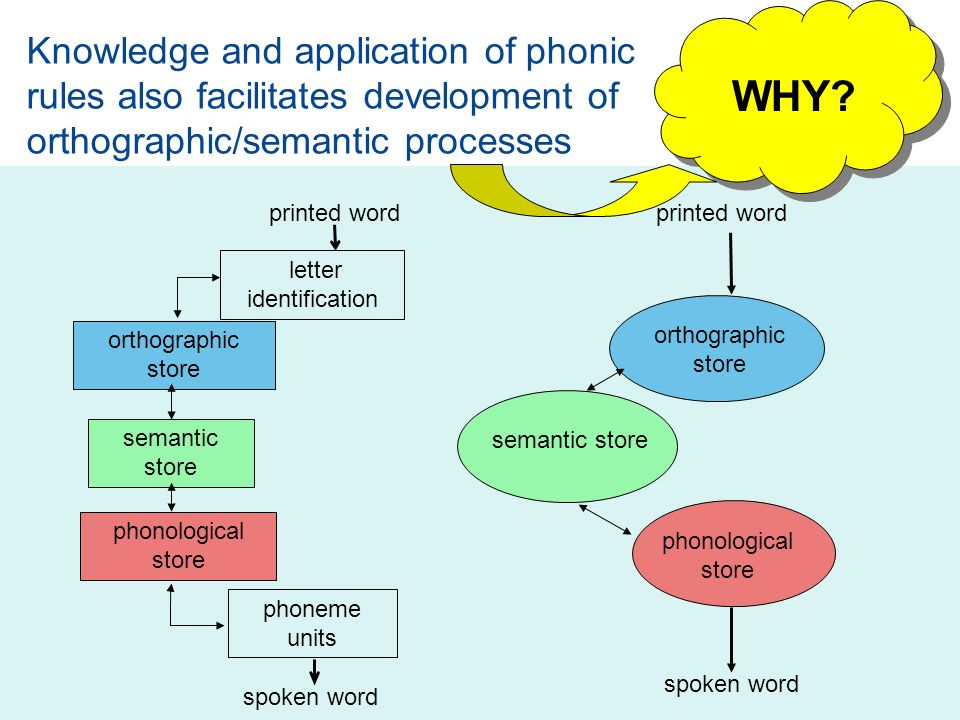 Knowledge and application of phonic rules also facilitates development of orthographic/semantic processes printed word letter identification phoneme units spoken word orthographic store semantic store phonological store orthographic store phonological store printed word spoken word semantic store WHY