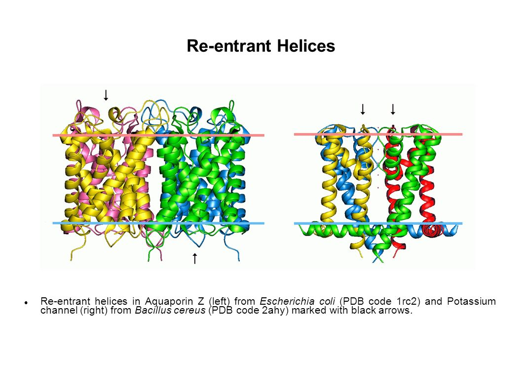Re-entrant Helices Re-entrant helices in Aquaporin Z (left) from Escherichia coli (PDB code 1rc2) and Potassium channel (right) from Bacillus cereus (PDB code 2ahy) marked with black arrows.