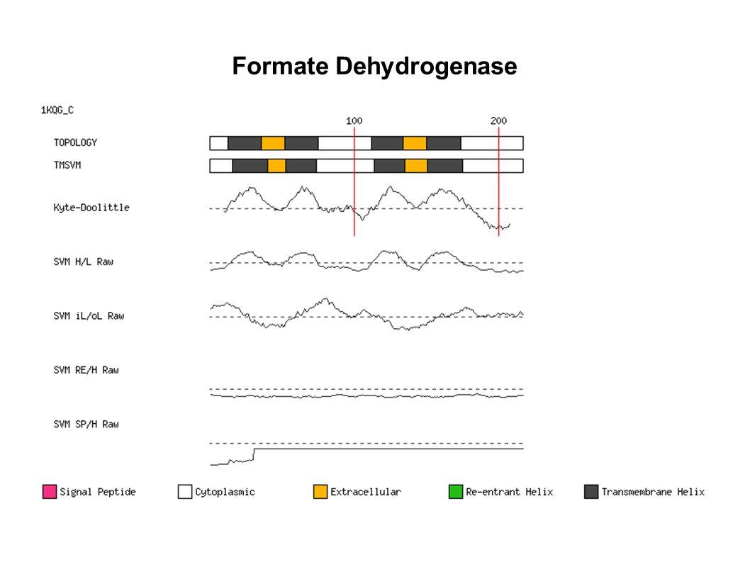 Formate Dehydrogenase