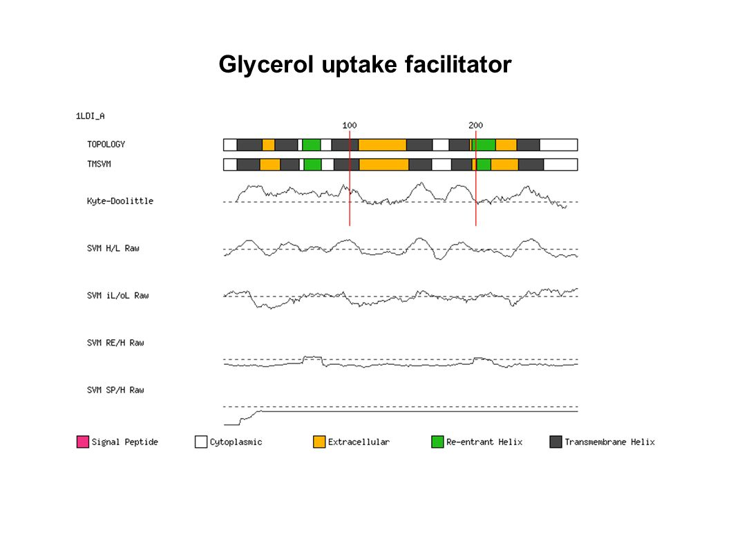 Glycerol uptake facilitator