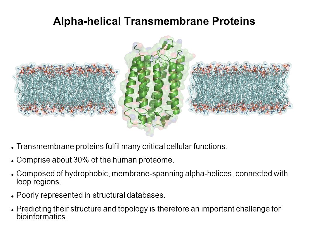 Transmembrane Protein Topology Topology of a transmembrane protein describes which regions are membrane-spanning and which are inside or outside (e.g.