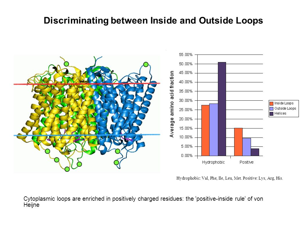 Discriminating between Inside and Outside Loops Hydrophobic: Val, Phe, Ile, Leu, Met.