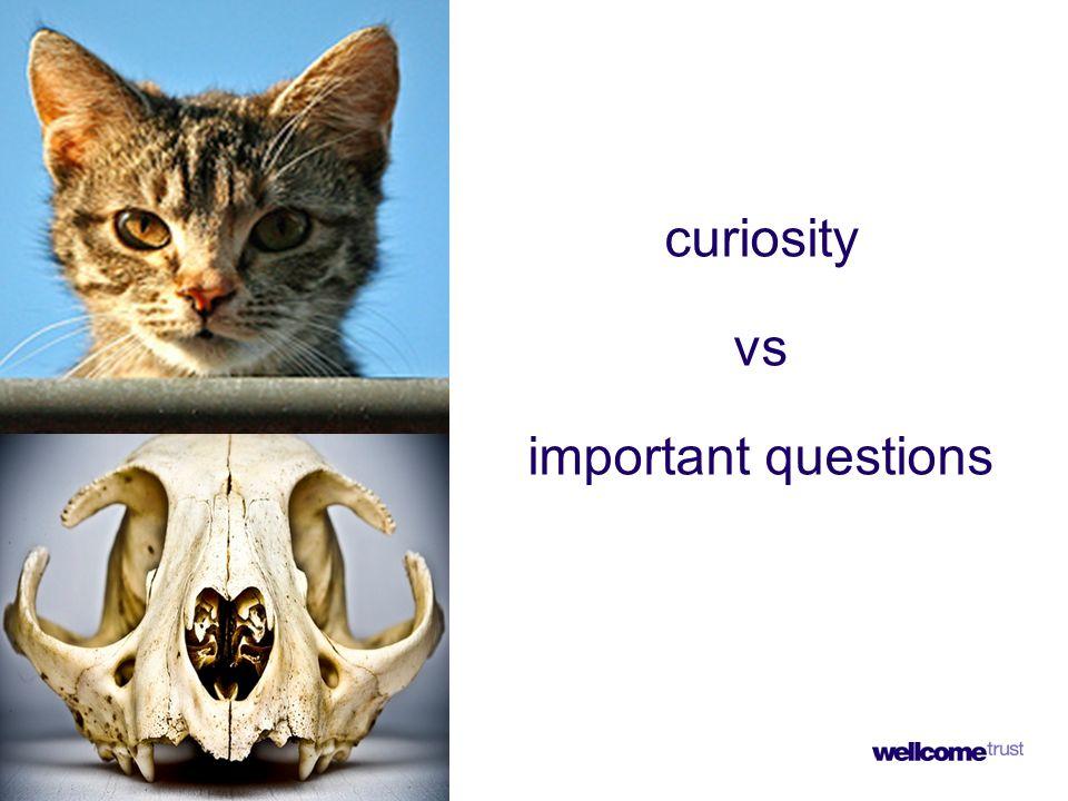 curiosity vs important questions