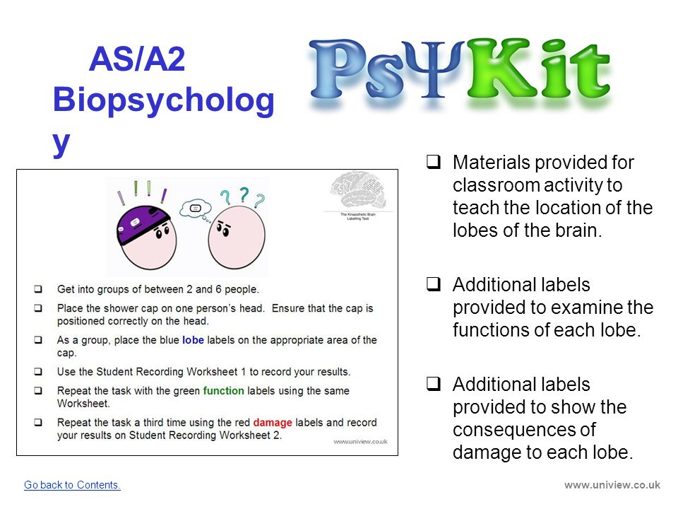 AS/A2 Biopsycholog y AS/A2 Biopsychology PsyKit Materials provided for classroom activity to teach the location of the lobes of the brain. Additional