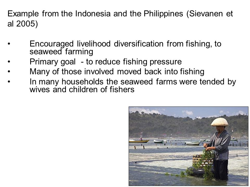 Example from the Indonesia and the Philippines (Sievanen et al 2005) Encouraged livelihood diversification from fishing, to seaweed farming Primary goal - to reduce fishing pressure Many of those involved moved back into fishing In many households the seaweed farms were tended by wives and children of fishers