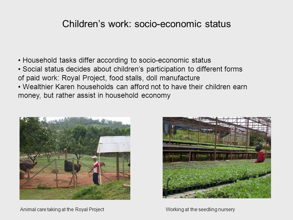 Childrens work: socio-economic status Household tasks differ according to socio-economic status Social status decides about childrens participation to different forms of paid work: Royal Project, food stalls, doll manufacture Wealthier Karen households can afford not to have their children earn money, but rather assist in household economy Animal care taking at the Royal ProjectWorking at the seedling nursery
