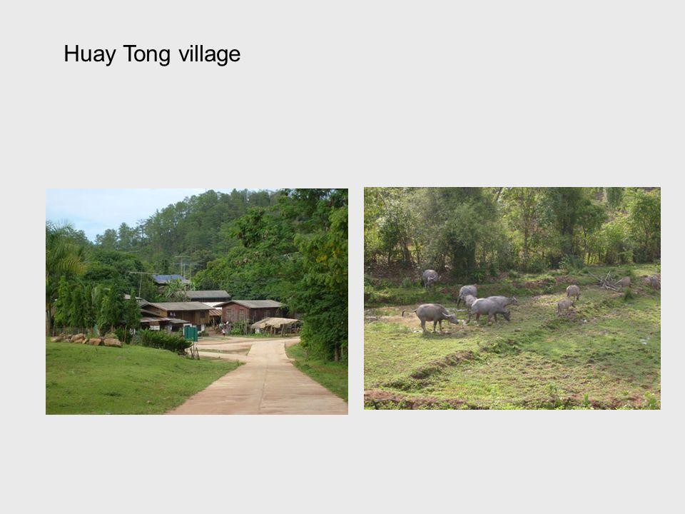Huay Tong village