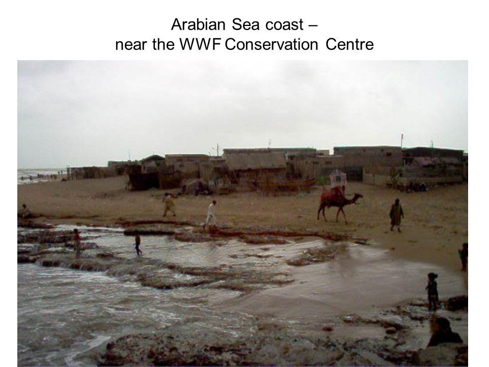 Arabian Sea coast – near the WWF Conservation Centre