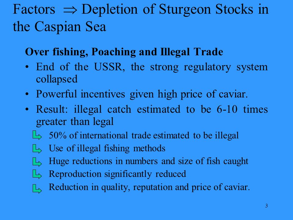 3 Factors Depletion of Sturgeon Stocks in the Caspian Sea Over fishing, Poaching and Illegal Trade End of the USSR, the strong regulatory system collapsed Powerful incentives given high price of caviar.