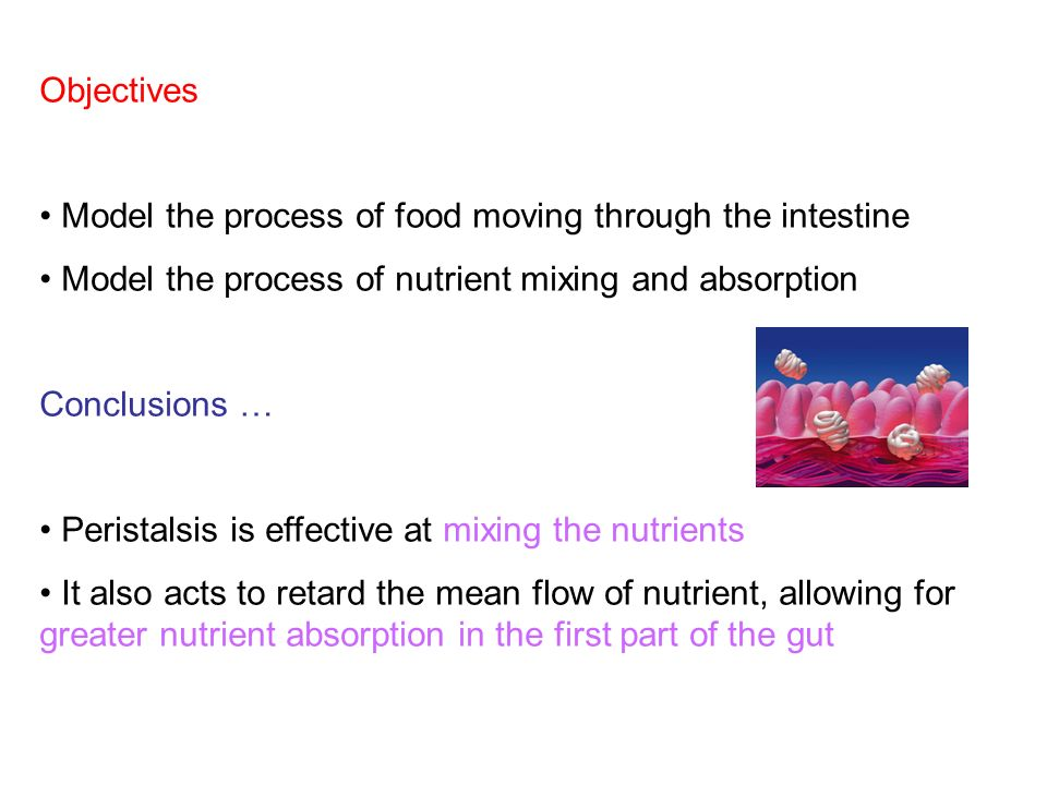 Objectives Model the process of food moving through the intestine Model the process of nutrient mixing and absorption Conclusions … Peristalsis is effective at mixing the nutrients It also acts to retard the mean flow of nutrient, allowing for greater nutrient absorption in the first part of the gut