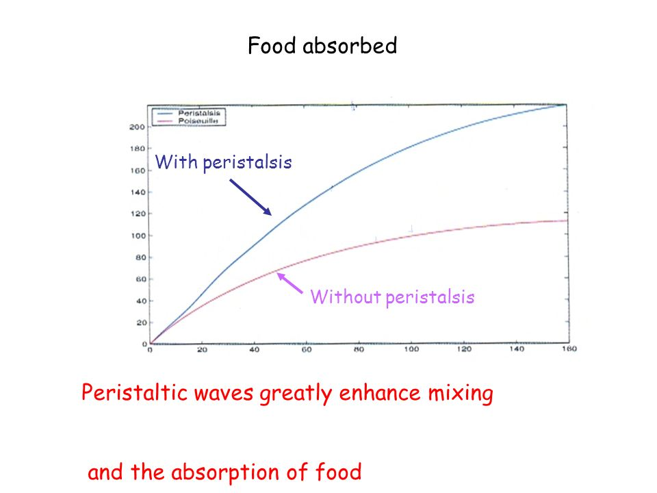Food absorbed With peristalsis Without peristalsis Peristaltic waves greatly enhance mixing and the absorption of food