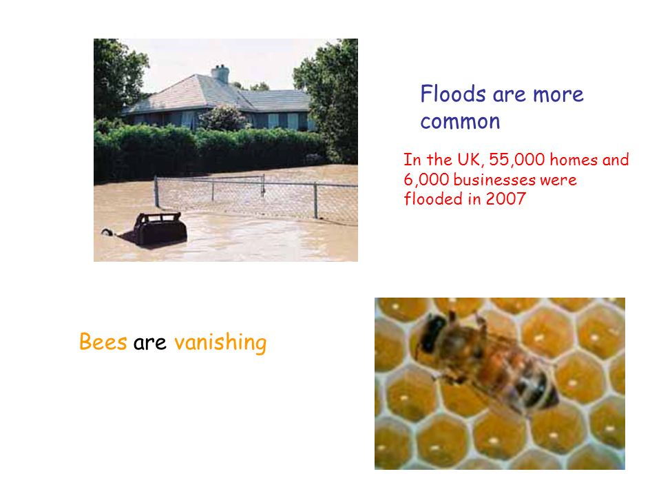 Floods are more common Bees are vanishing In the UK, 55,000 homes and 6,000 businesses were flooded in 2007