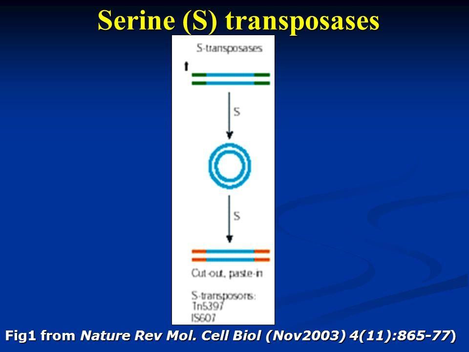 Serine (S) transposases Fig1 from Nature Rev Mol. Cell Biol (Nov2003) 4(11):865-77)