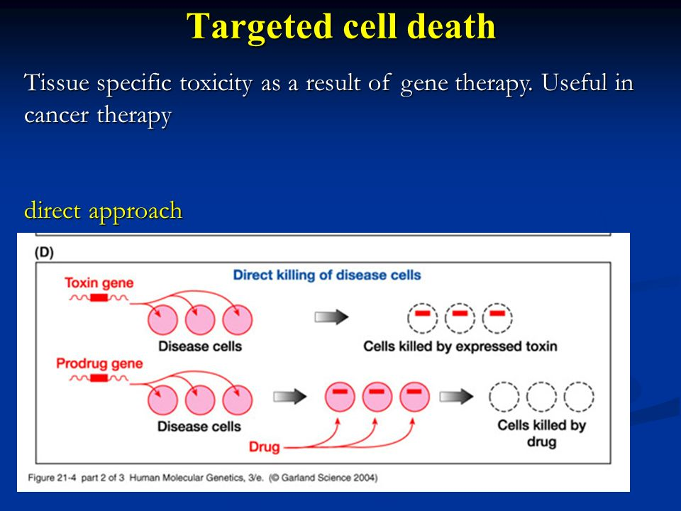 Targeted cell death Tissue specific toxicity as a result of gene therapy. Useful in cancer therapy direct approach