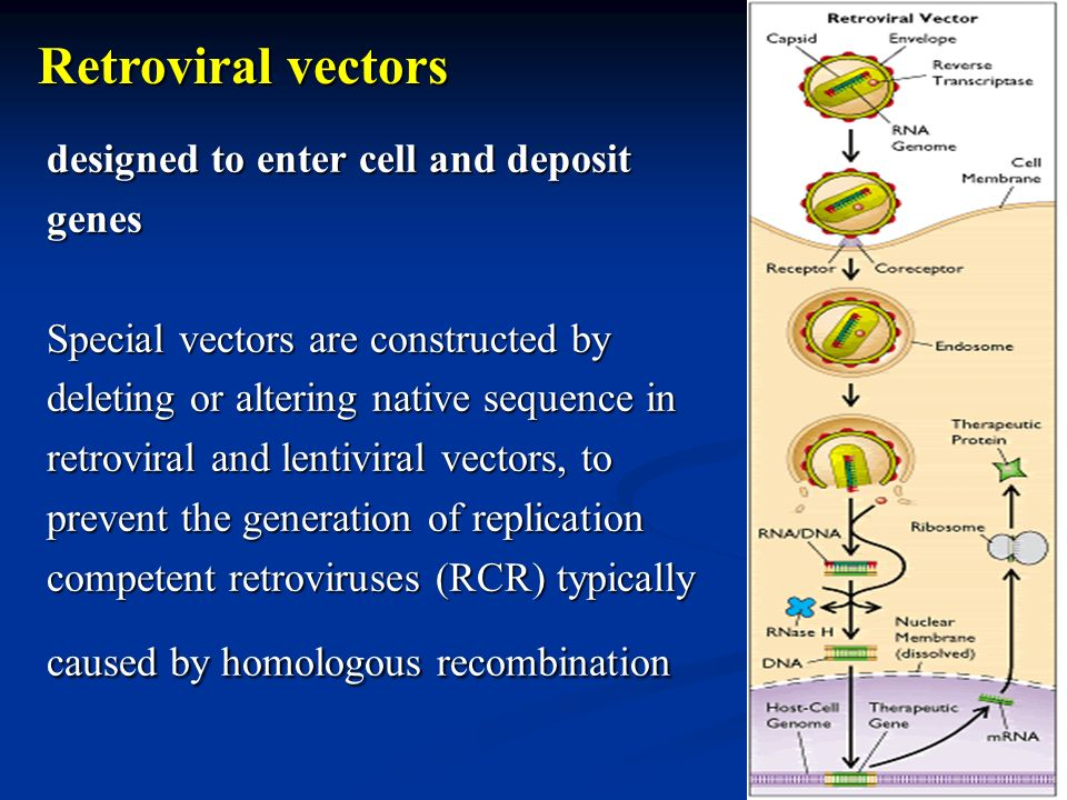 designed to enter cell and deposit genes Special vectors are constructed by deleting or altering native sequence in retroviral and lentiviral vectors,