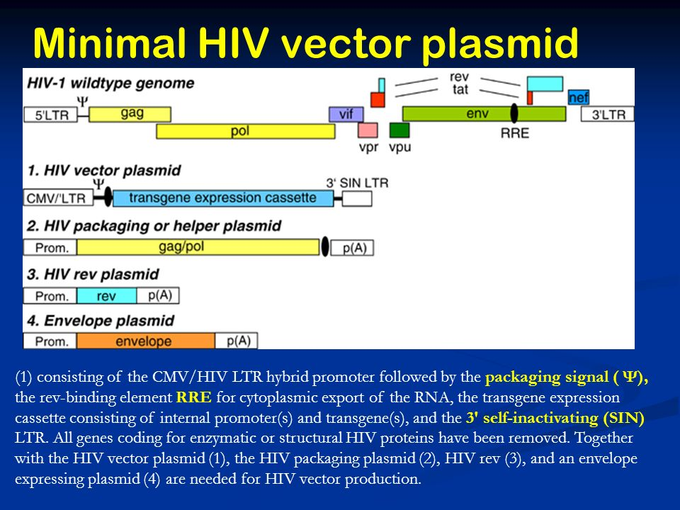 Minimal HIV vector plasmid (1) consisting of the CMV/HIV LTR hybrid promoter followed by the packaging signal ( Ψ), the rev-binding element RRE for cytoplasmic export of the RNA, the transgene expression cassette consisting of internal promoter(s) and transgene(s), and the 3 self-inactivating (SIN) LTR.