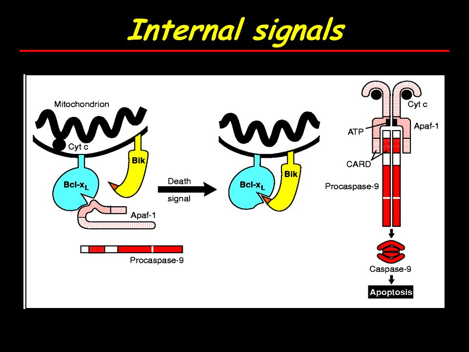 Internal signals
