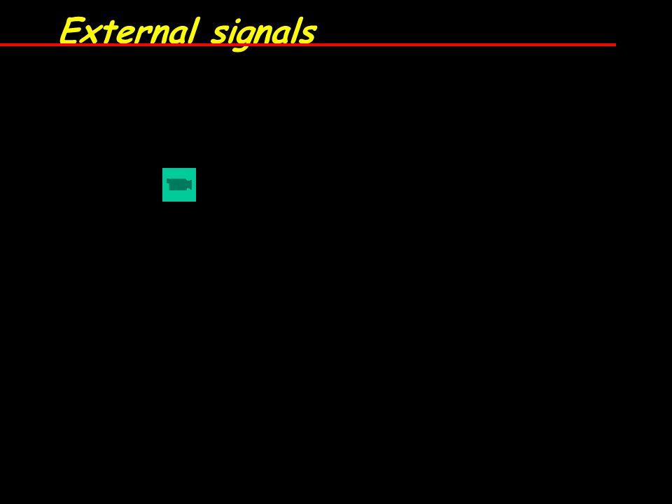 External signals