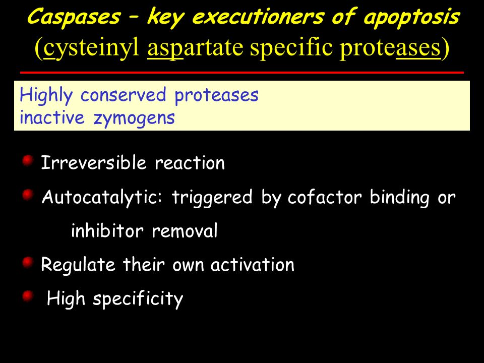 Caspases – key executioners of apoptosis (cysteinyl aspartate specific proteases) Highly conserved proteases inactive zymogens Irreversible reaction Autocatalytic: triggered by cofactor binding or inhibitor removal Regulate their own activation High specificity