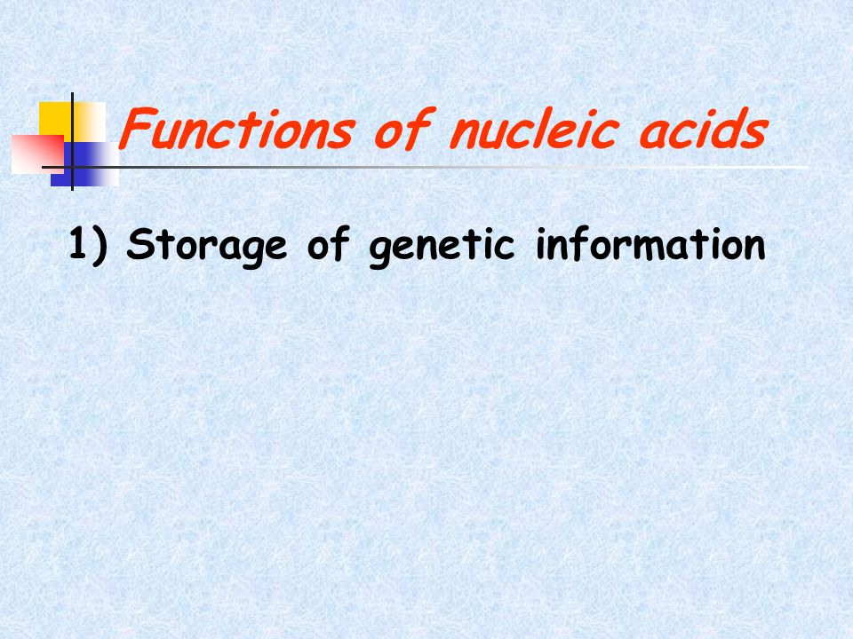 Functions of nucleic acids 1) Storage of genetic information