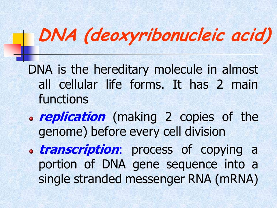 DNA (deoxyribonucleic acid) DNA is the hereditary molecule in almost all cellular life forms. It has 2 main functions replication (making 2 copies of