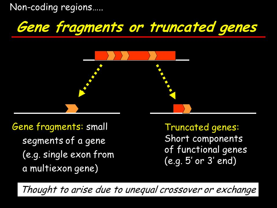 Gene fragments or truncated genes Gene fragments: small segments of a gene (e.g. single exon from a multiexon gene) Truncated genes: Short components