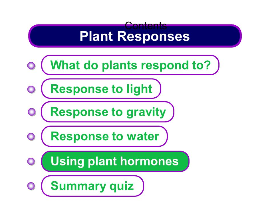 Plant Responses Response to light Response to water Response to gravity Using plant hormones Summary quiz What do plants respond to? Contents
