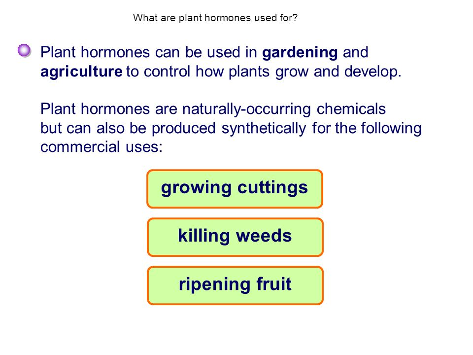 What are plant hormones used for? Plant hormones can be used in gardening and agriculture to control how plants grow and develop. Plant hormones are n