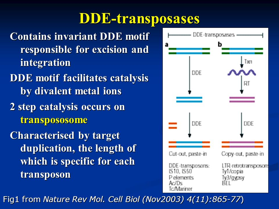 DDE-transposases Contains invariant DDE motif responsible for excision and integration DDE motif facilitates catalysis by divalent metal ions 2 step c