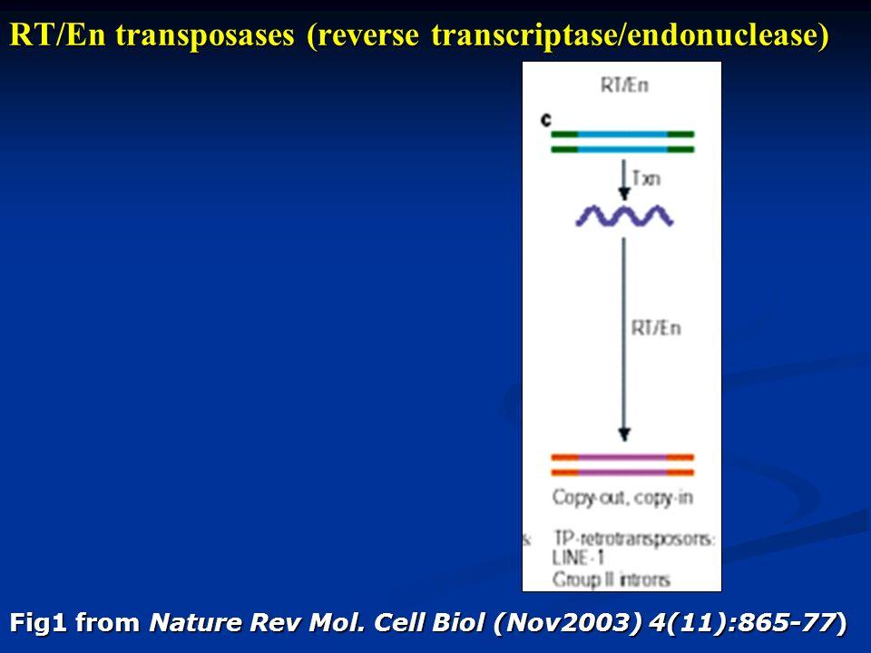 RT/En transposases (reverse transcriptase/endonuclease) Fig1 from Nature Rev Mol.