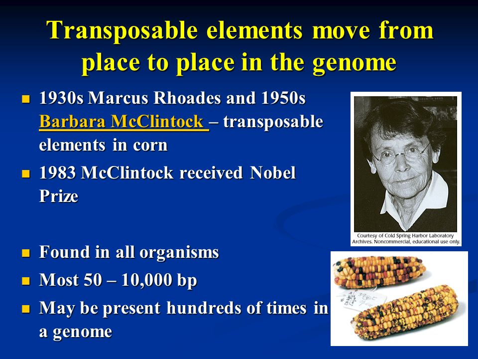Transposable elements move from place to place in the genome 1930s Marcus Rhoades and 1950s Barbara McClintock – transposable elements in corn 1930s M