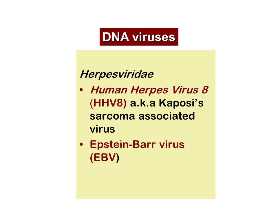 Herpesviridae Human Herpes Virus 8 ( HHV8) a.k.a Kaposis sarcoma associated virus Epstein-Barr virus (EBV) DNA viruses