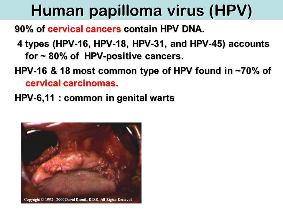 Human papilloma virus (HPV) 90% of cervical cancers contain HPV DNA.