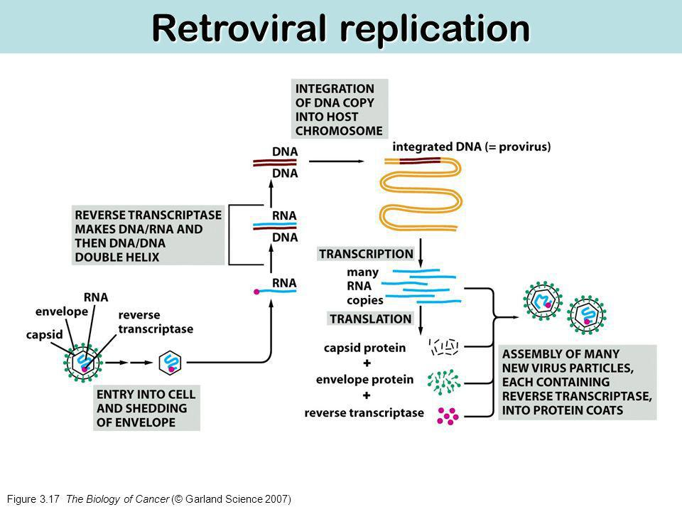 Figure 3.17 The Biology of Cancer (© Garland Science 2007) Retroviral replication