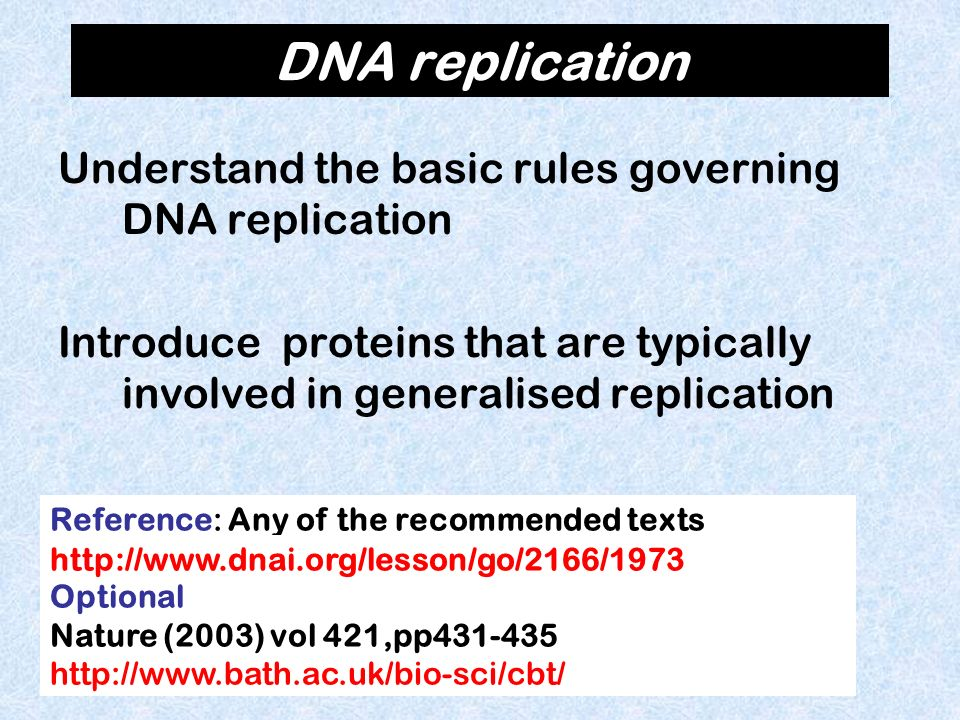 What kind of enzyme synthesizes the new DNA strand.