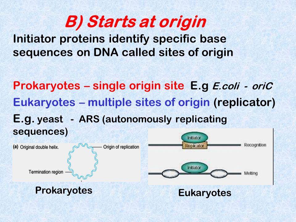 B) Starts at origin Initiator proteins identify specific base sequences on DNA called sites of origin Prokaryotes – single origin site E.g E.coli - or