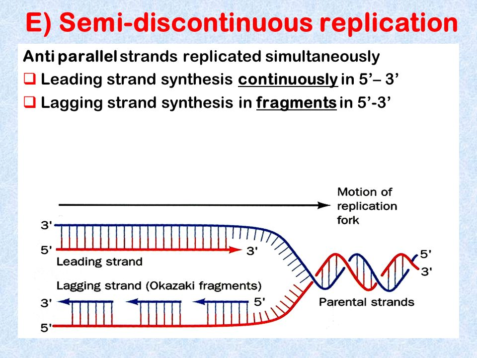 E) Semi-discontinuous replication Anti parallel strands replicated simultaneously Leading strand synthesis continuously in 5– 3 Lagging strand synthes