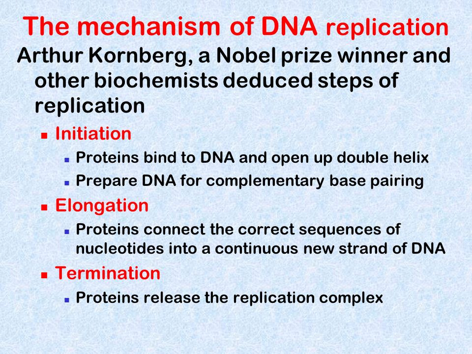 The mechanism of DNA replication Arthur Kornberg, a Nobel prize winner and other biochemists deduced steps of replication Initiation Proteins bind to