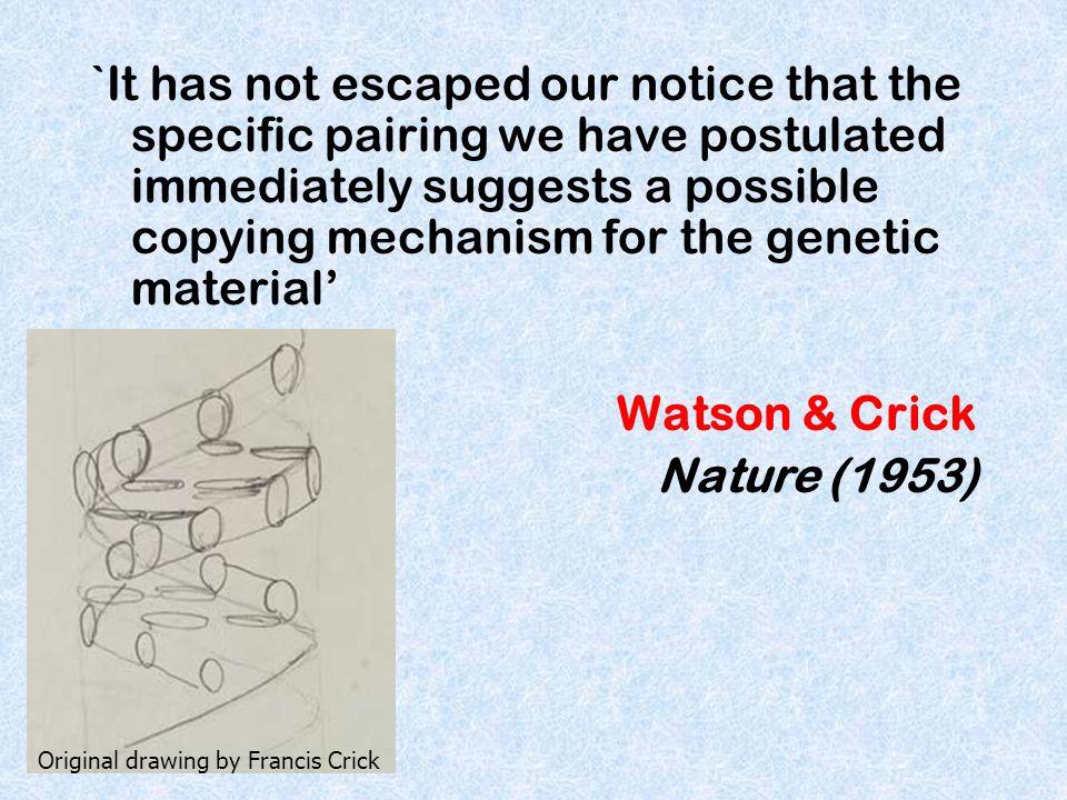 Eukaryotic chromosomes have multiple origins of replication 1.True 2.False