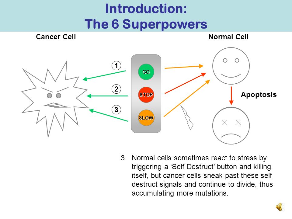 GO STOP Normal CellCancer Cell SLOW 2 1 2.Even if the neighbouring cells produce a Stop signal, cancer cells override these signals and continue divid