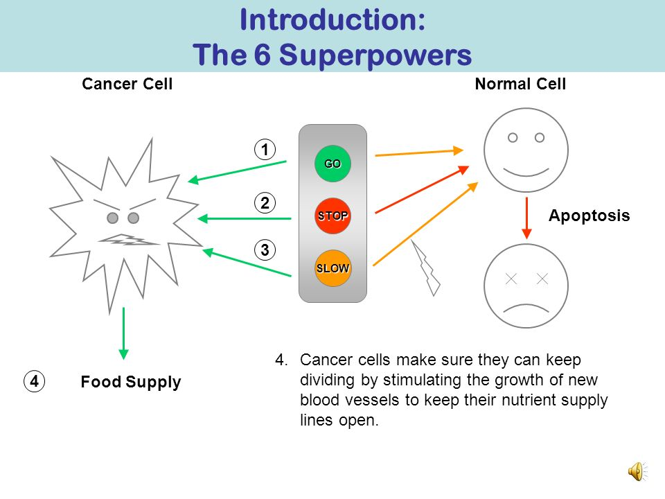 GO STOP Normal CellCancer Cell SLOW 2 1 3.Normal cells sometimes react to stress by triggering a Self Destruct button and killing itself, but cancer c