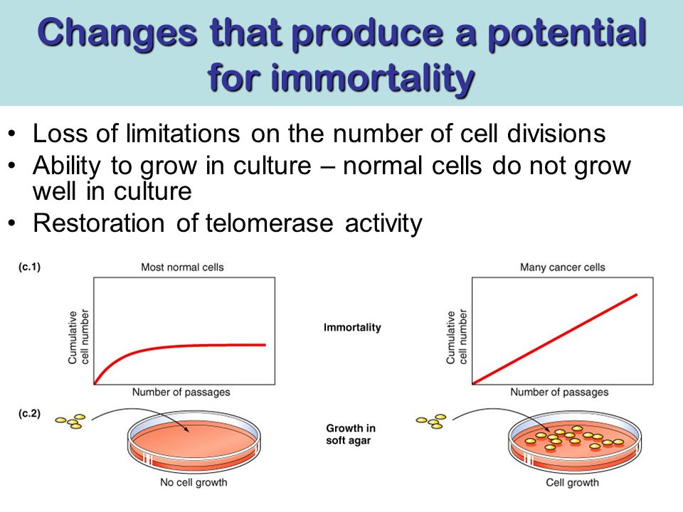 Changes produce genomic and karyotypic instability and often show gross rearrangements Normal cellsCancerous cells