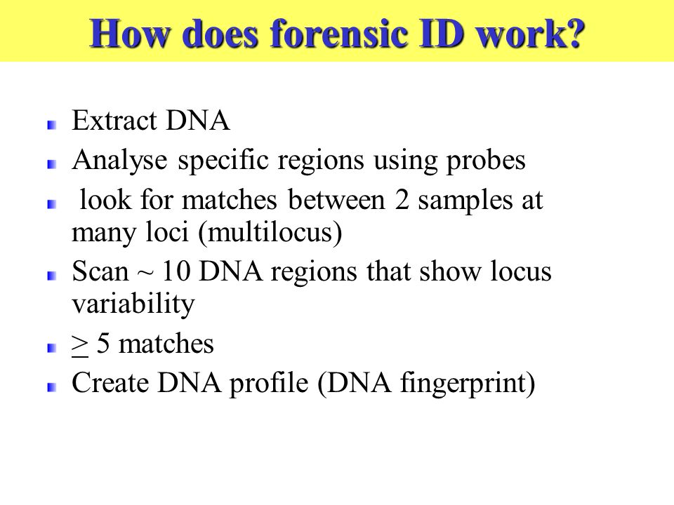 Extract DNA Analyse specific regions using probes look for matches between 2 samples at many loci (multilocus) Scan ~ 10 DNA regions that show locus variability > 5 matches Create DNA profile (DNA fingerprint) How does forensic ID work